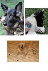 Heilsteine für Haustiere